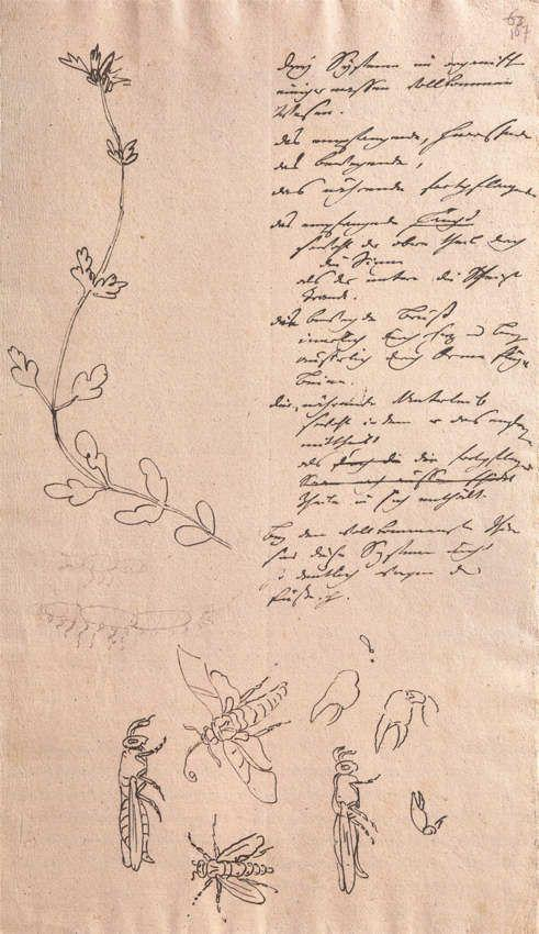 Пример рукописи Иоганна Гете