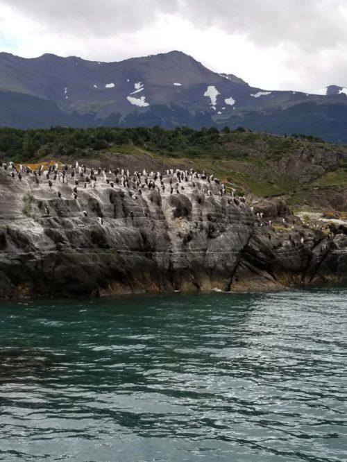 Чилийские пингвины. Фото Галины Ицкович // Формаслов