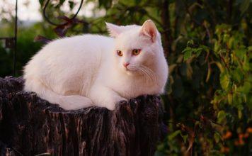 Белый кот // Формаслов