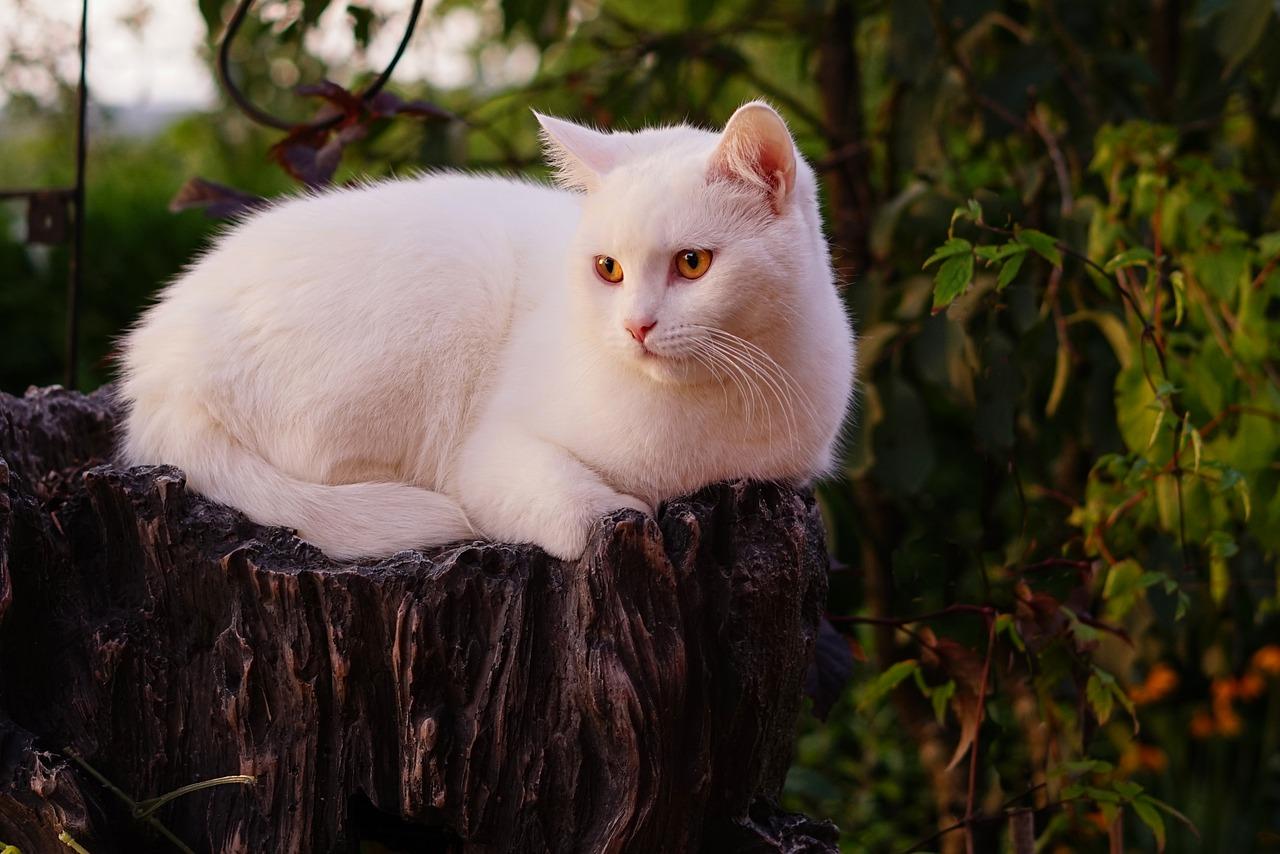 Черноволосая Кошечка Любит Быть Сверху