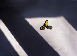 Бабочка // Формаслов