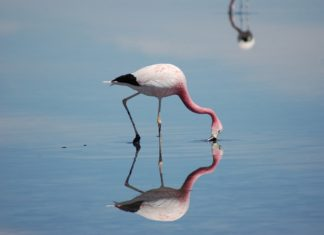 Фламинго.Чили // Формаслов