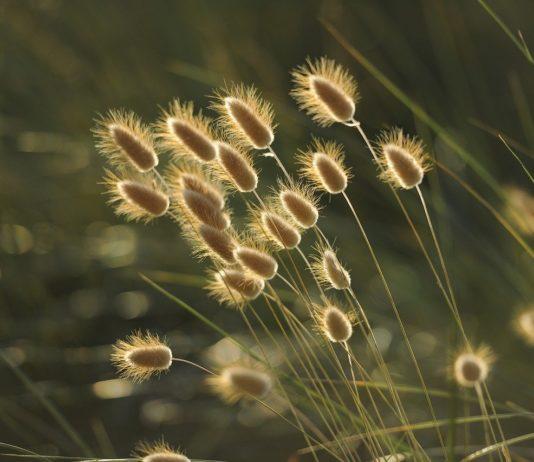 Травы // Формаслов