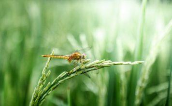 Зелень травы // Формаслов