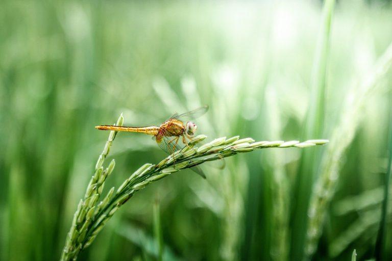 Зеленой рябью щерится трава // Стихи. Выбор Алексея Остудина
