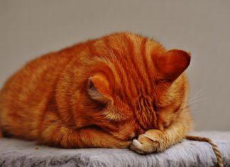 Рыжий кот // Формаслов