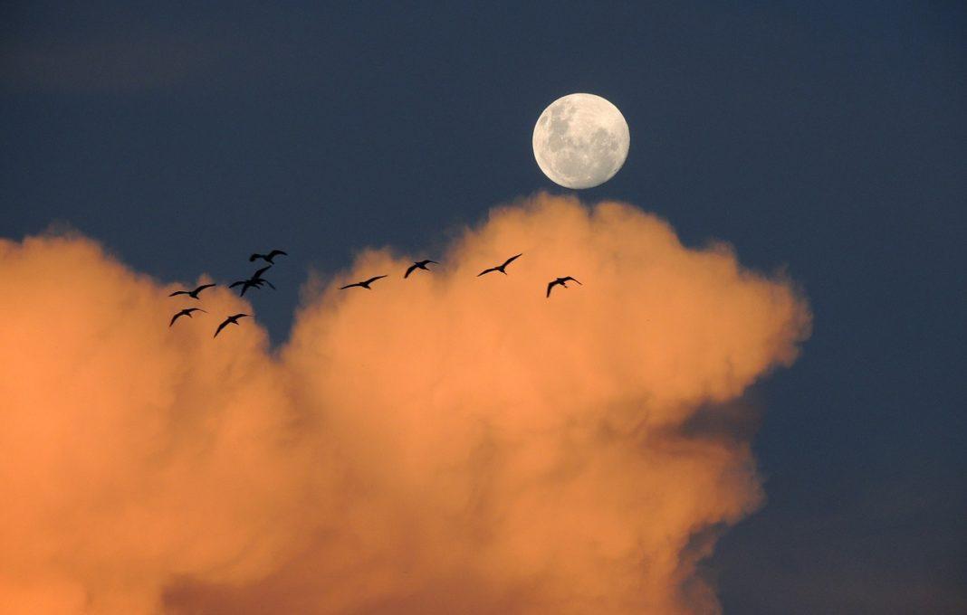 Луна и птицы // Формаслов
