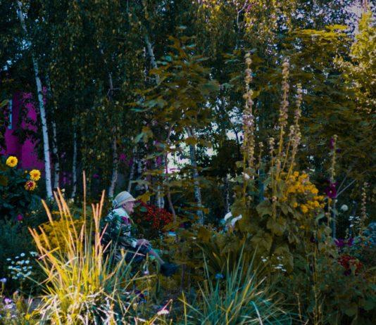 Цветы. Фото Насти Верховенцевой // Формаслов