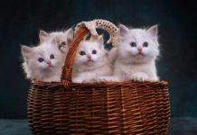 корзина с котятами