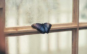 Бабочка на окне // Формаслов