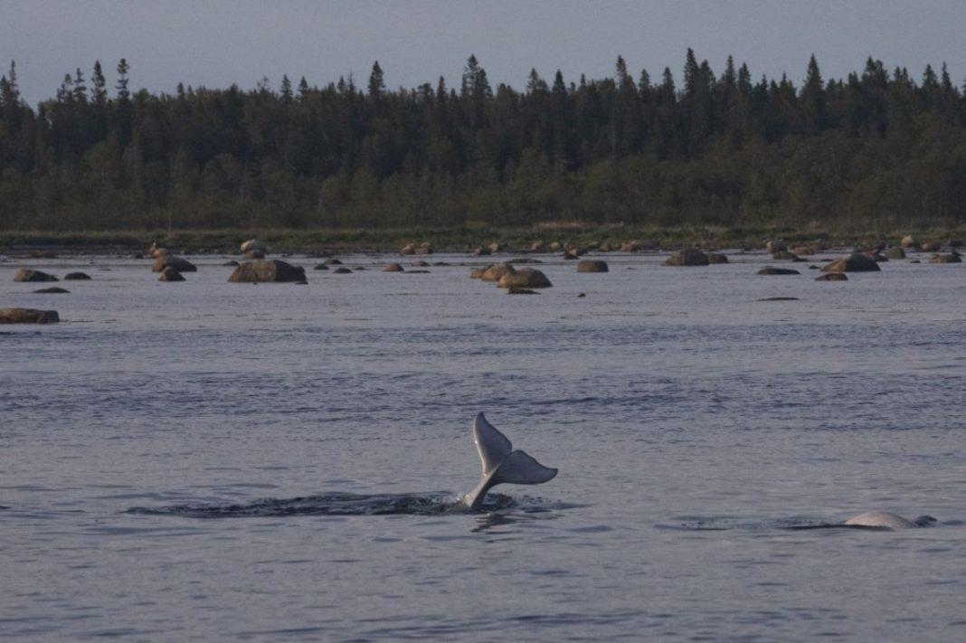 Хвост кита. Фото Полины Лаврененко // Формаслов